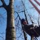 Baumpflegeteam in der Illschlucht Feldkirch