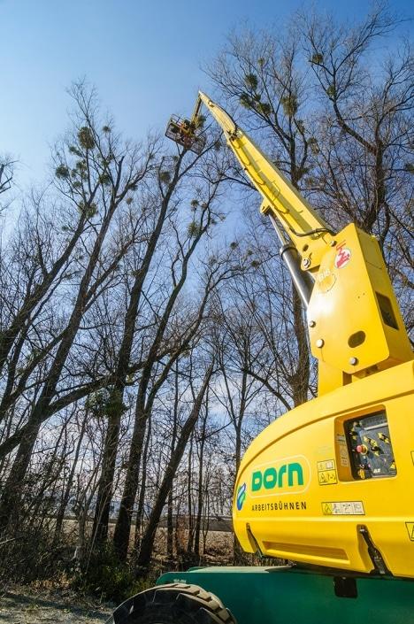 Baumpflegearbeiten in Vorarlberg