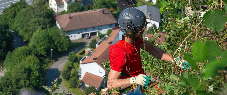 Baumpflege mit Seilklettertechnik im Extremgelände
