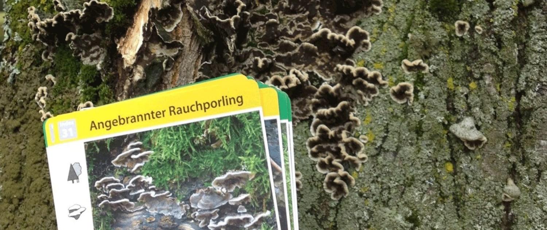 Schadensbegutachtung am Baum, Schädlinge