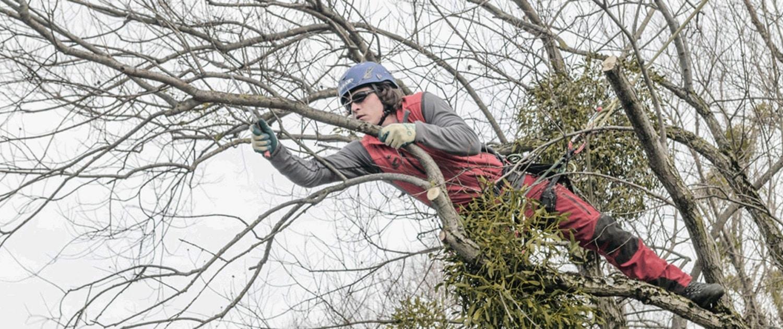 Baumpflege mit Seilklettertechnik in allen Höhen